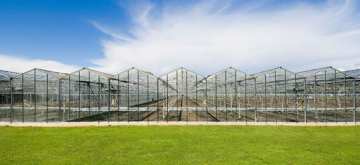 commercial-greenhouses-2