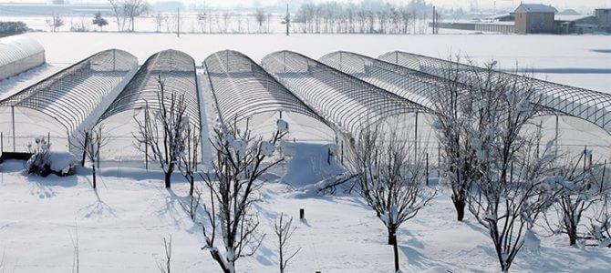 Kış Serası Yetiştiriciliği Dikkat Edilmesi Gereken İpuçları